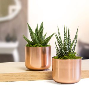 Livetrends succulents in copper pots